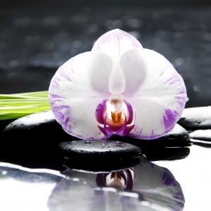 une orchid e pour votre feng shui maison r novation d coration d 39 int rieurs. Black Bedroom Furniture Sets. Home Design Ideas