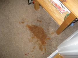 tache moquette urine sauce huile